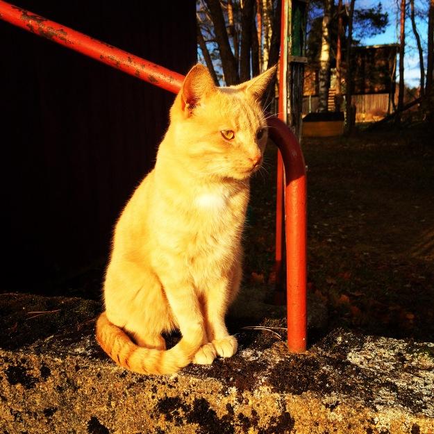 2015 6 cat
